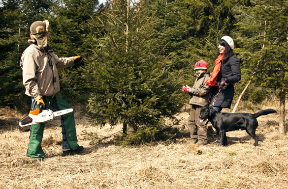 Weihnachtsbaum wald schlagen
